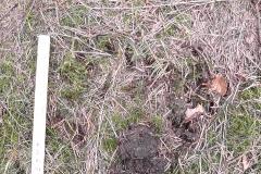 12_Medvědí stopa v mechu, vedle trusu, autor_Lukáš Jonák
