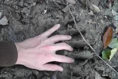 16_Medvědí stopa, autor_Lukáš Jonák