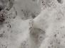 Medvěd - stopy ve snehu