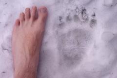 17_Medvědí-stopa-s-měřítkem-autor_Michal-Šulgan