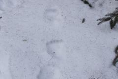 1_Medvědí stopy_12 hodin staré při 10°C, autor_Lukáš Jonák