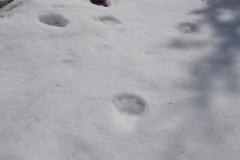 2_Medvědí stopy_12 hodin staré při 10°C, autor_Lukáš Jonák