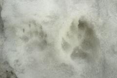 14_Stopy jezevce lesního x velkého psa domácího, autor_Irena Vrbová