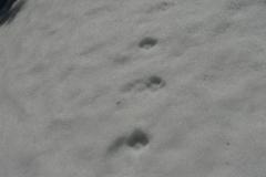 7_Stopní dráha lišky obecné, autor_Barbora Telnarová